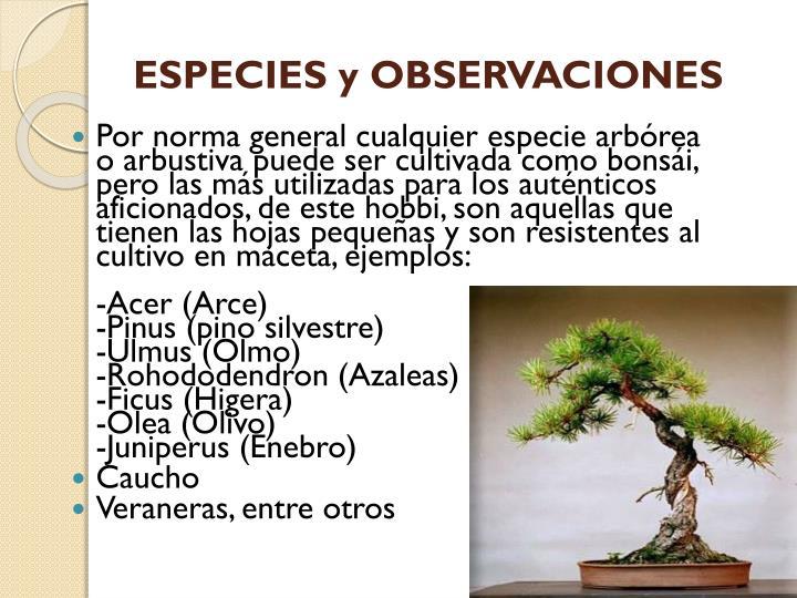 ESPECIES y OBSERVACIONES