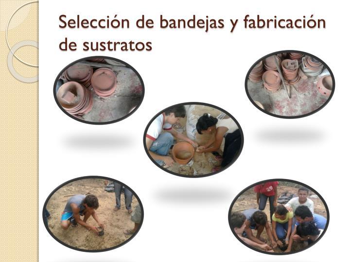 Selección de bandejas y fabricación de sustratos