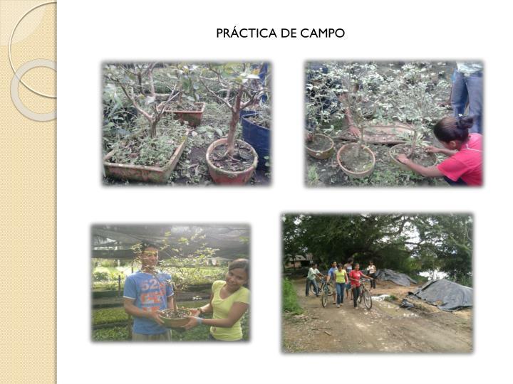 PRÁCTICA DE CAMPO