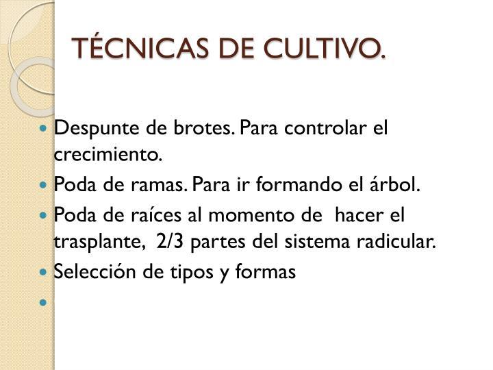 TÉCNICAS DE CULTIVO.