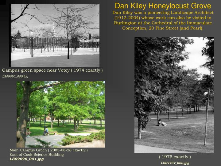 Dan Kiley Honeylocust Grove
