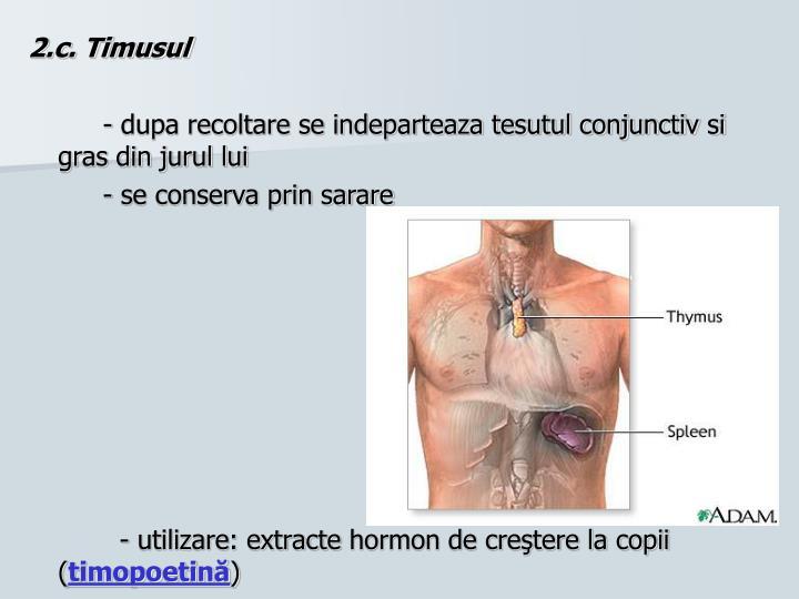 2.c. Timusul