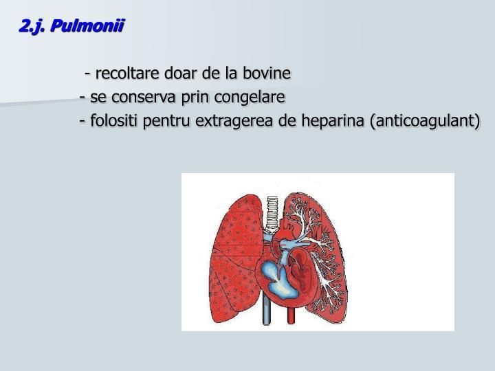 2.j. Pulmonii