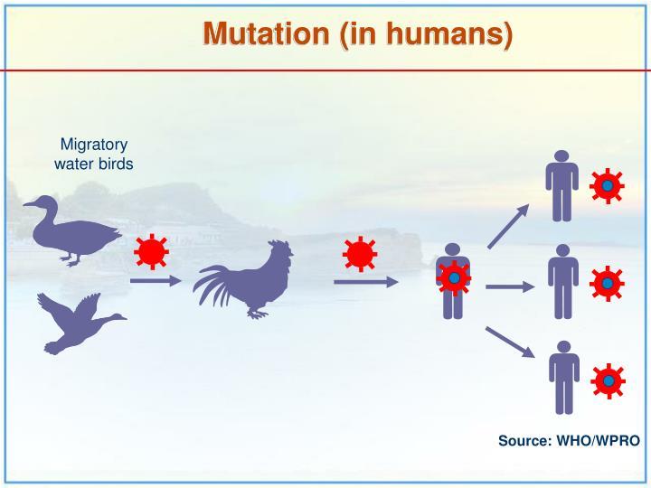 Migratory water birds