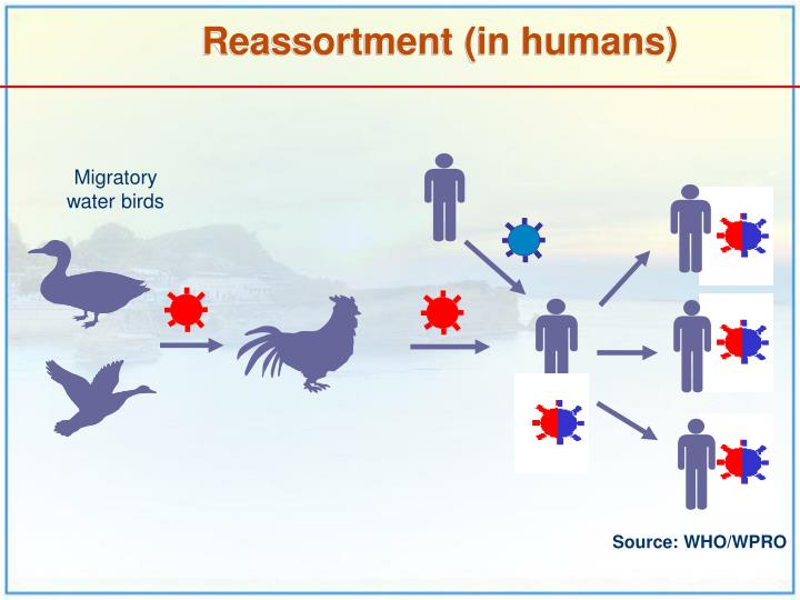 Reassortment (in humans)