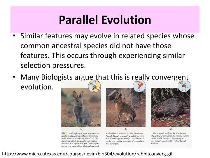 Parallel Evolution