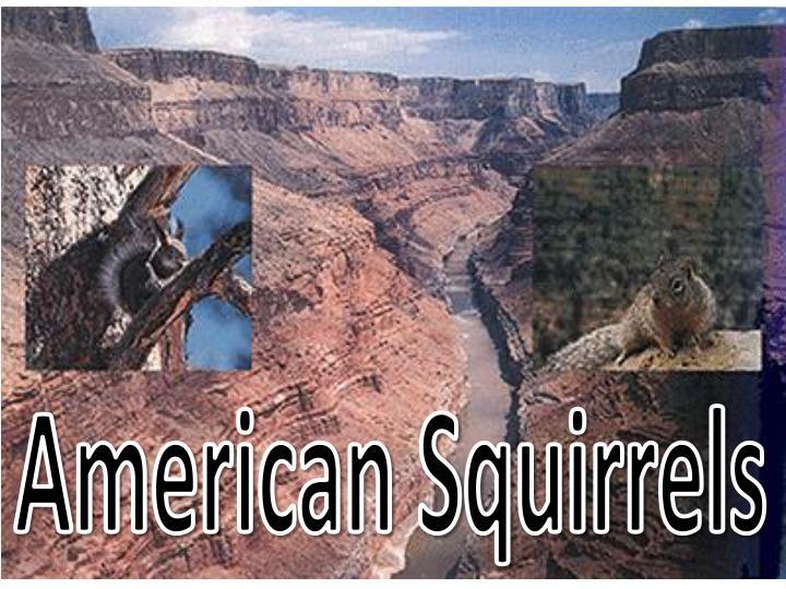 American Squirrels