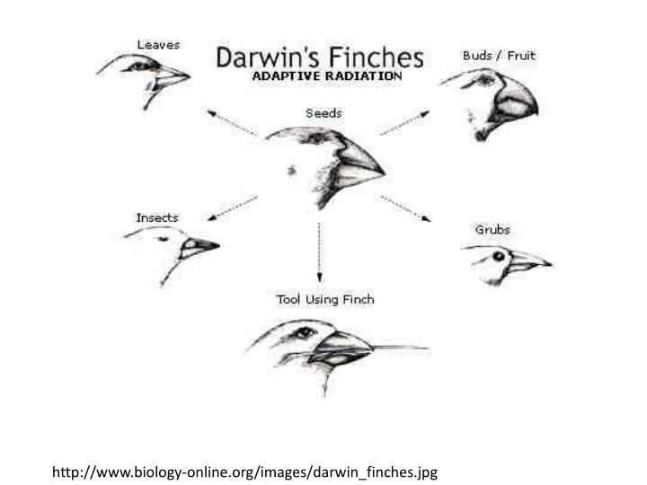 http://www.biology-online.org/images/darwin_finches.jpg