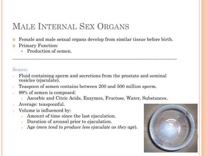 Male internal sex organs
