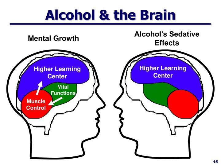 Alcohol & the Brain