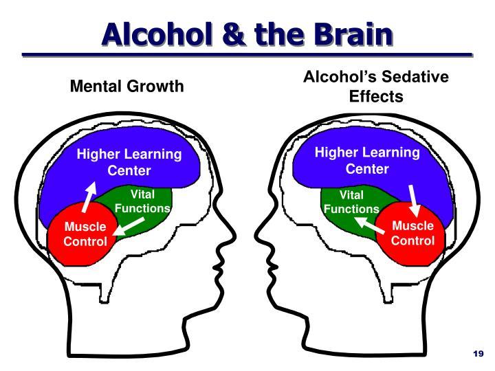 Alcohol's Sedative Effects