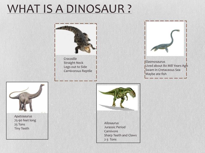 WHAT IS A DINOSAUR ?