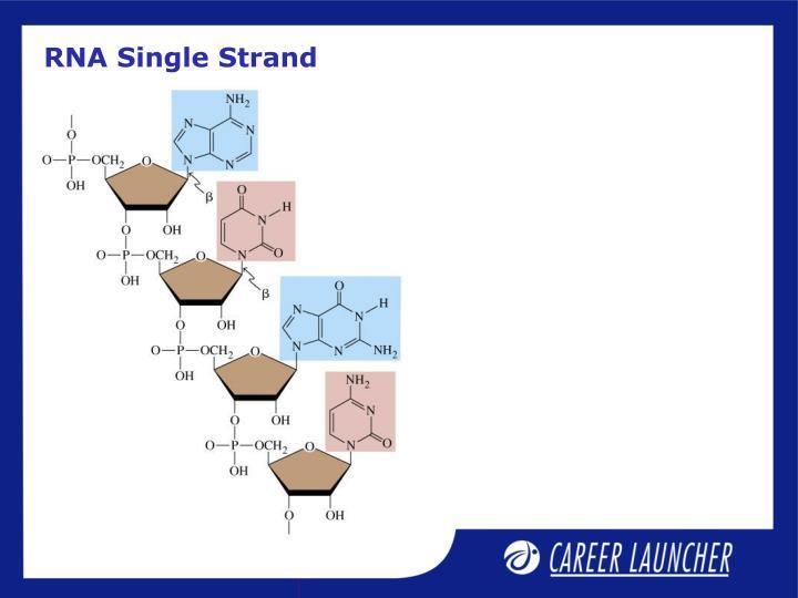 RNA Single Strand