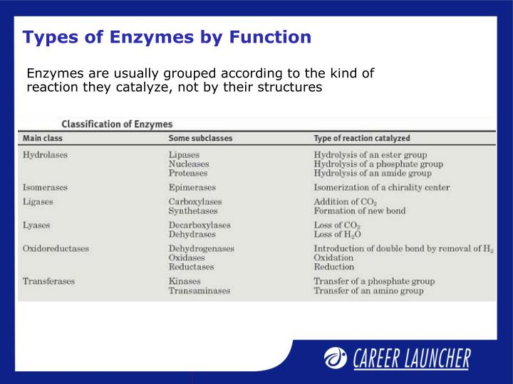 Types of Enzymes by Function