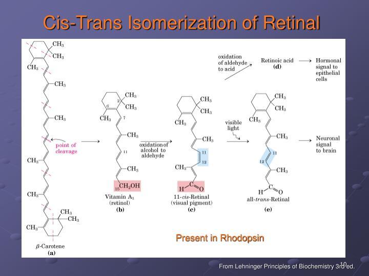 Cis-Trans Isomerization of Retinal
