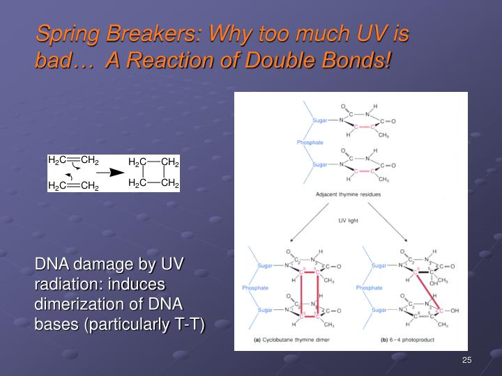 Spring Breakers: Why too much UV is bad…  A Reaction of Double Bonds!