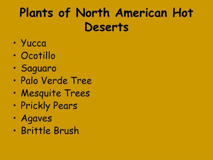 Plants of North American Hot Deserts