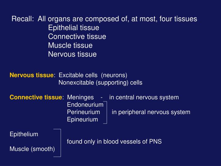 Recall:  All organs are composed of, at most, four tissues