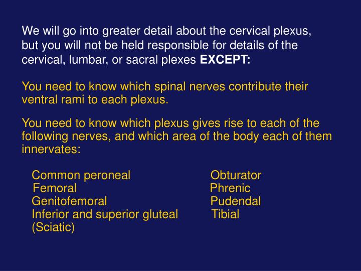 We will go into greater detail about the cervical plexus, but you will not be held responsible for details of the cervical, lumbar, or sacral plexes