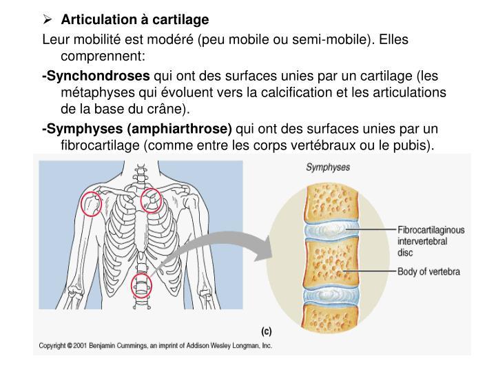 Articulation à cartilage