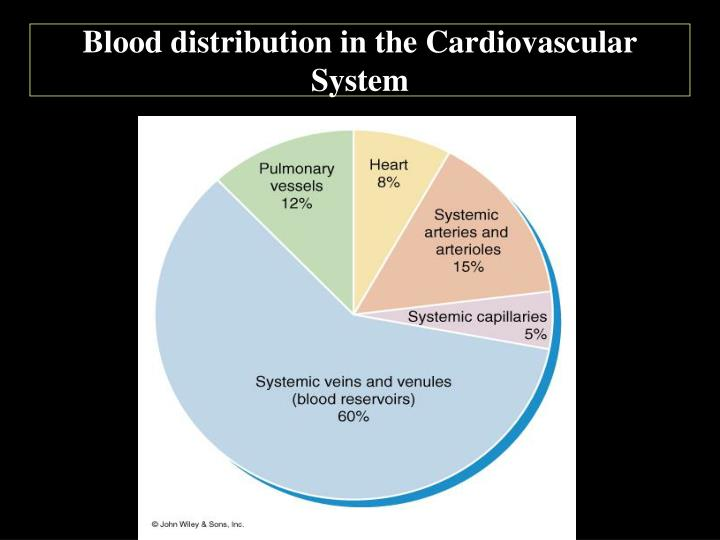 Blood distribution in the Cardiovascular System