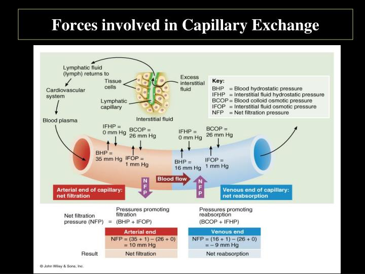 Forces involved in Capillary Exchange