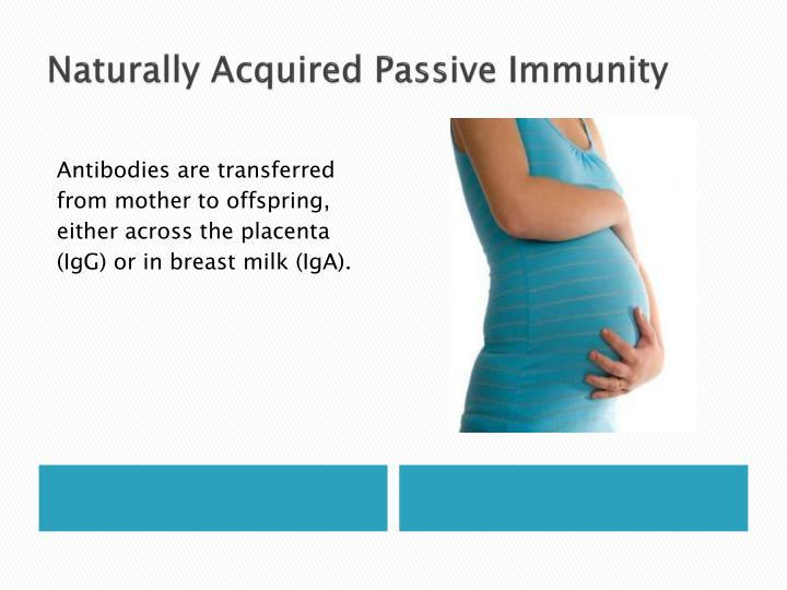 Naturally Acquired Passive Immunity