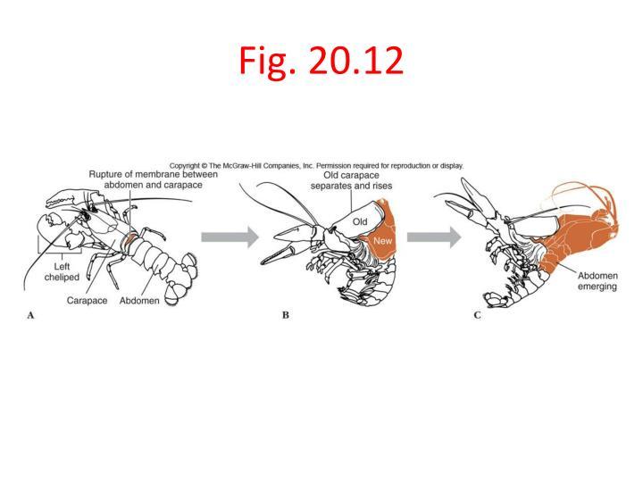 ppt - phylum arthropoda  u2013 phylum and subphyla characteristics powerpoint presentation