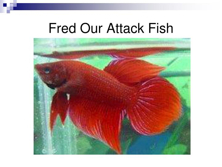 Fred Our Attack Fish