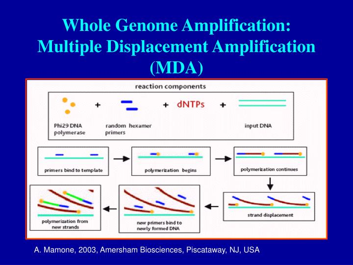 Whole Genome Amplification: