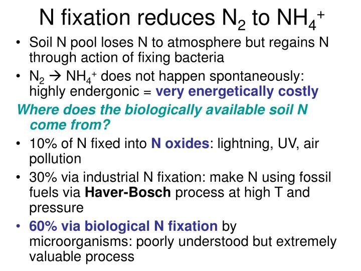 N fixation reduces N