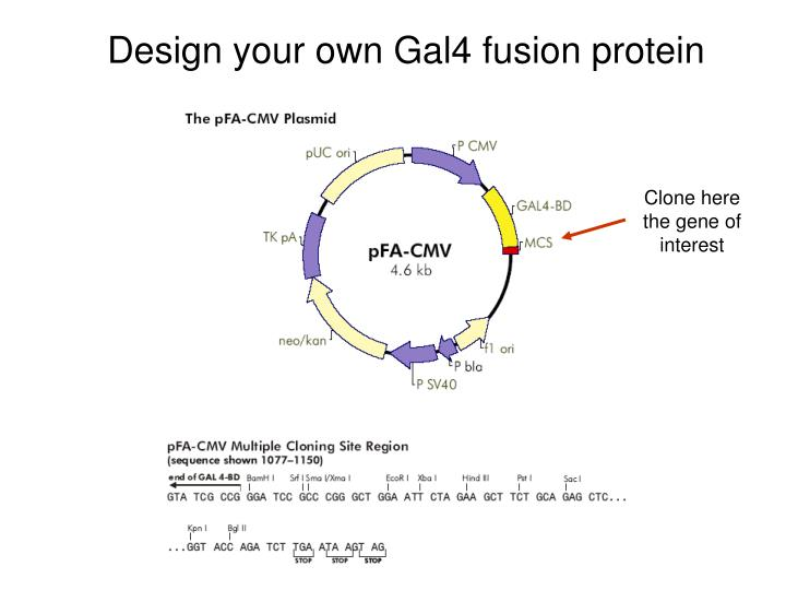 Design your own Gal4 fusion protein