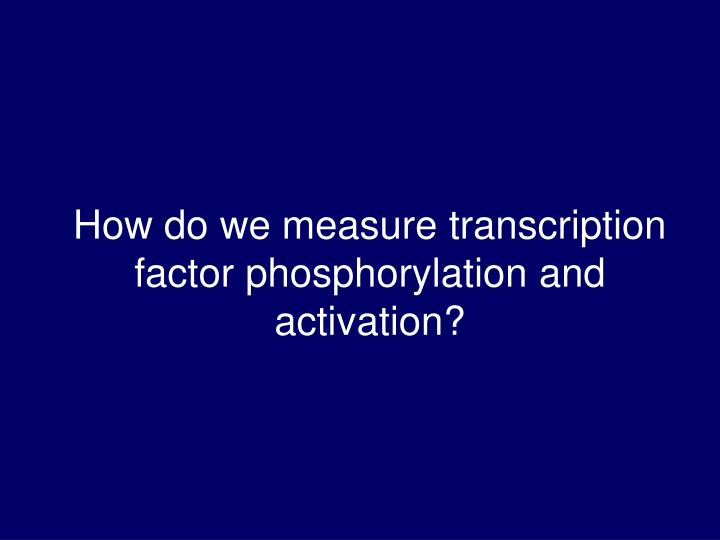 How do we measure transcription factor phosphorylation and activation?