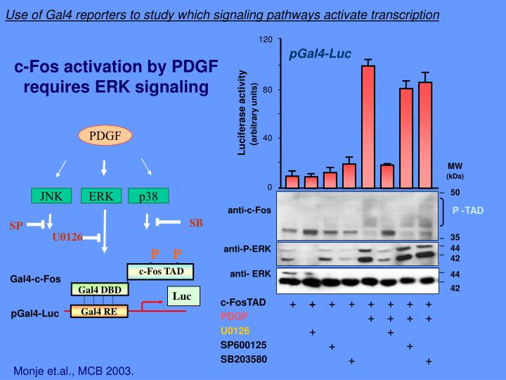 Use of Gal4 reporters to study which signaling pathways activate transcription
