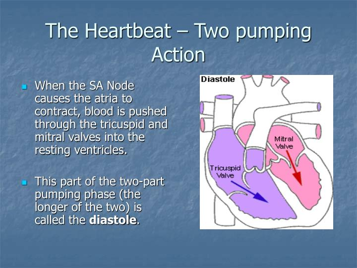 PPT - Structure and Function of the Heart PowerPoint ...