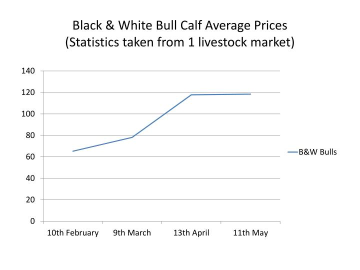 Black & White Bull Calf Average