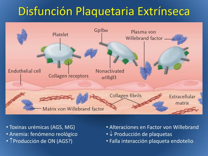 Disfunción Plaquetaria Extrínseca