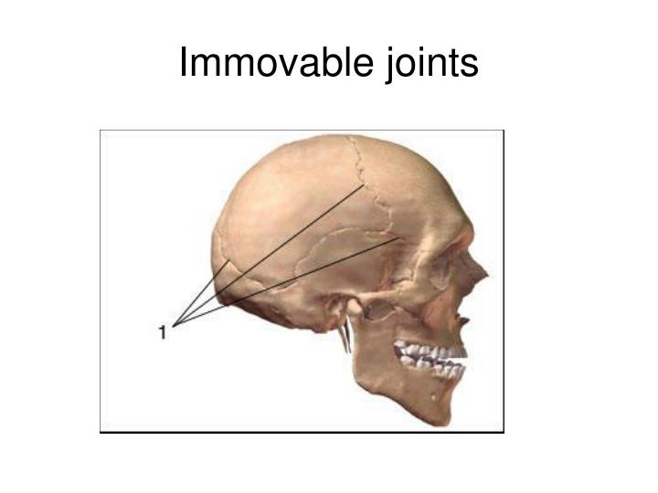 immovable joints n.