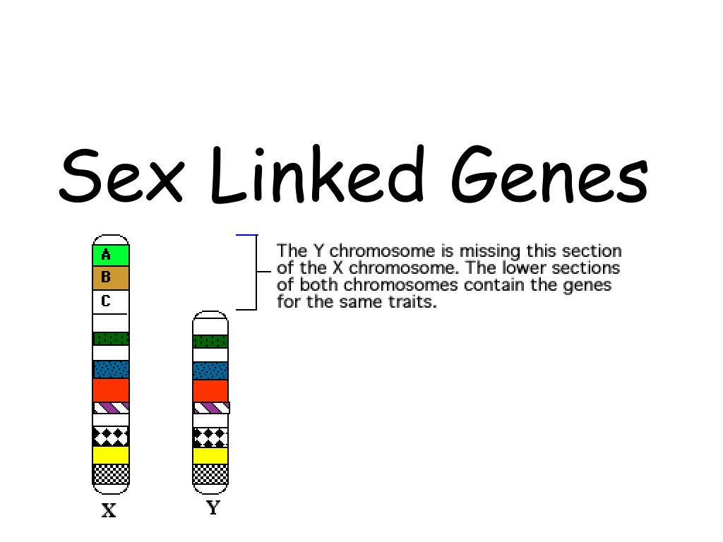 What are sex linked genes foto 61