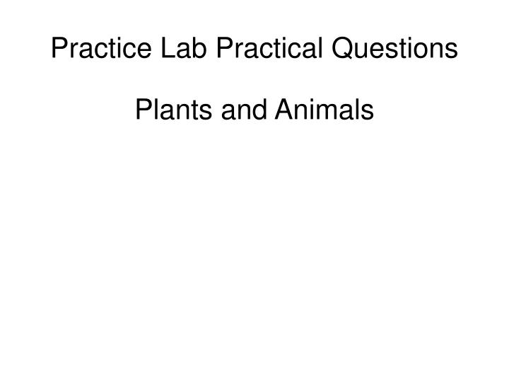 practice lab practical questions n.