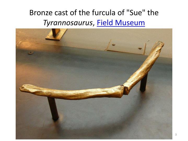 Bronze cast of the furcula of sue the tyrannosaurus field museum