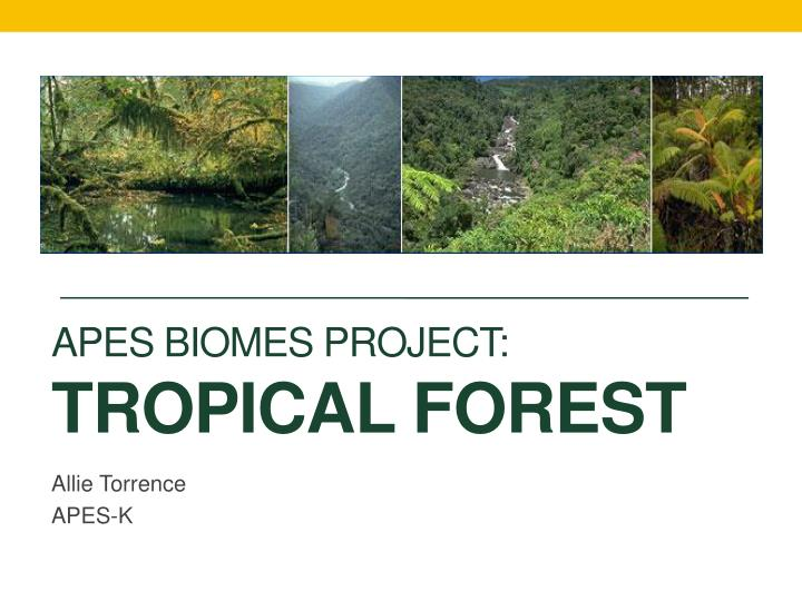 Apes biomes project tropical forest