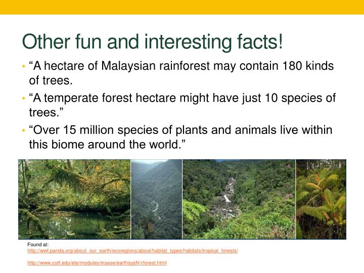 Other fun and interesting facts!