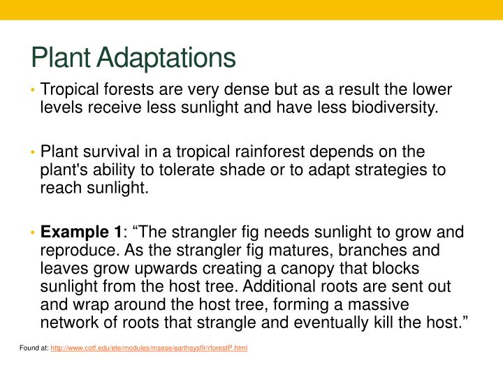 Plant Adaptations