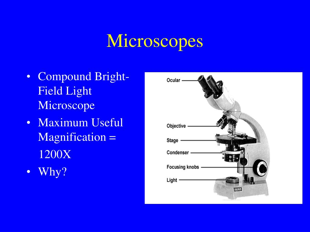 bright field light microscope