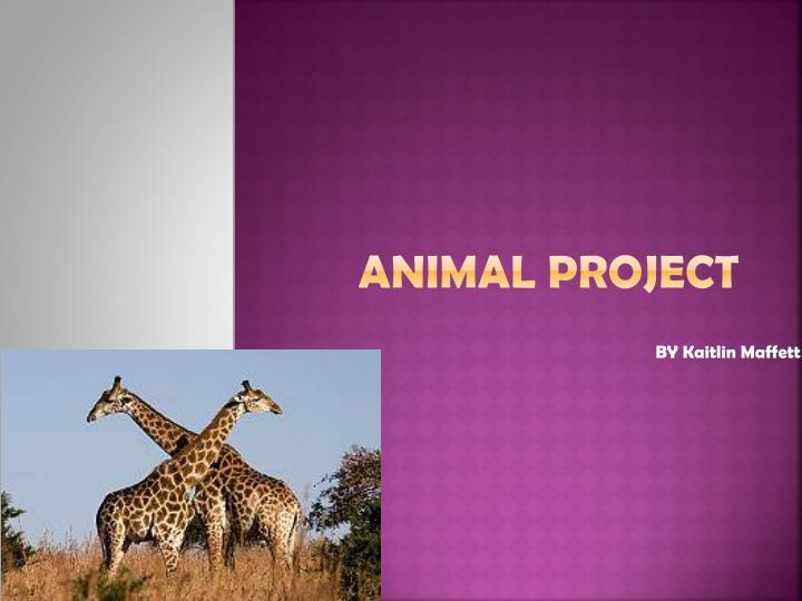 animal project n.