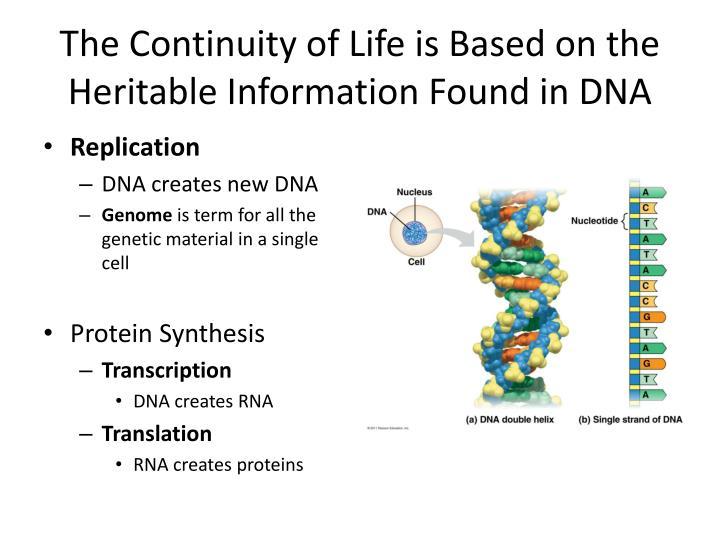 introduction themes in the study of Chapter 1 introduction: themes in the study of life 2 evolution and the diversity of life 3 the process of scientific inquiry 1 unifying themes in biology.