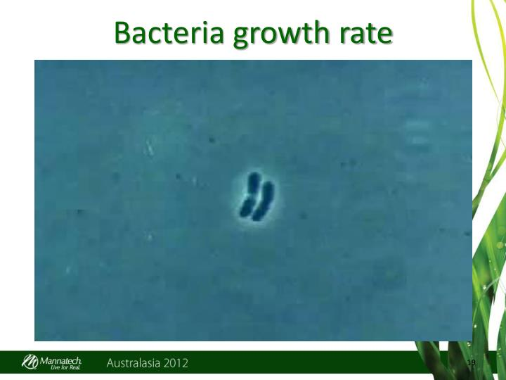 Bacteria growth rate