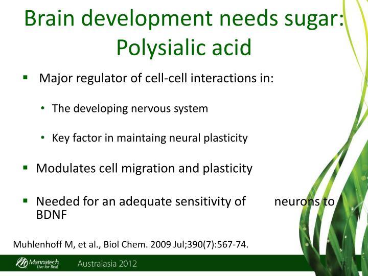 Brain development needs sugar: Polysialic acid