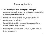 ammonification